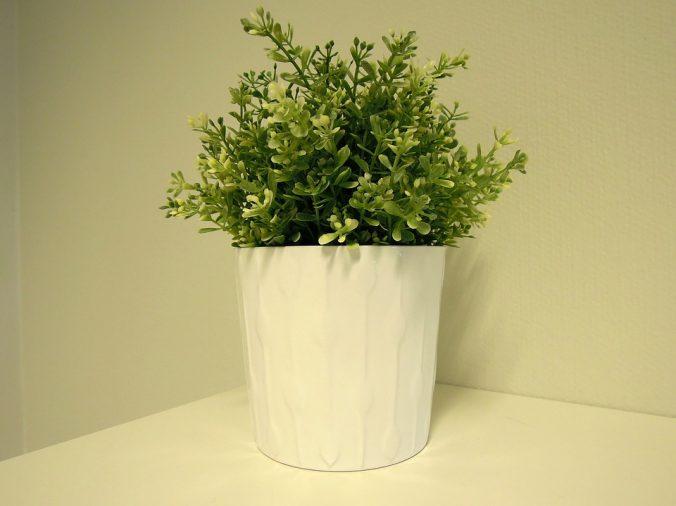 plant-1269227_960_720